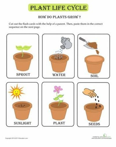 sequencing how plants grow - Google Search