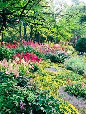 Shade garden with astilbe