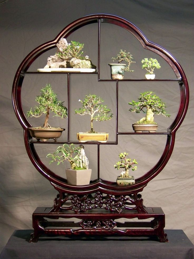 japanese bonsai essay Bonsai is a japanese pronunciation of the chinese penzai (盆栽 pun-sai),  a  rhymed prose essay from the same period, rhymeprose on a.