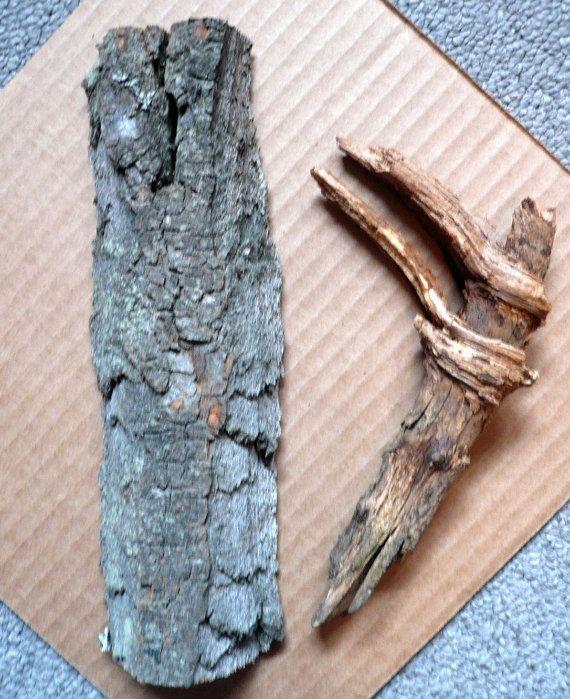 Wood Carvers Sample Set Cottonwood Bark Tree Knot by Tasteliberty, $18.00