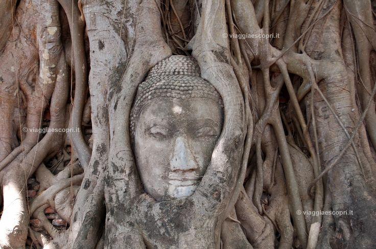 Ayutthaya, testa del Buddha inglobata dalle radici degli alberi al Wat Phra Mahatat #Thailand http://www.viaggiaescopri.it/ayutthaya-capitale-dei-templi-thailandia/
