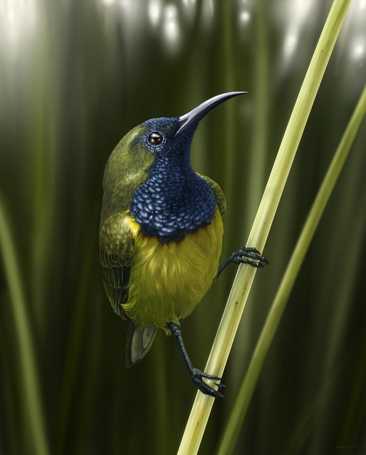 Olive-backed Sunbird by aweng8892