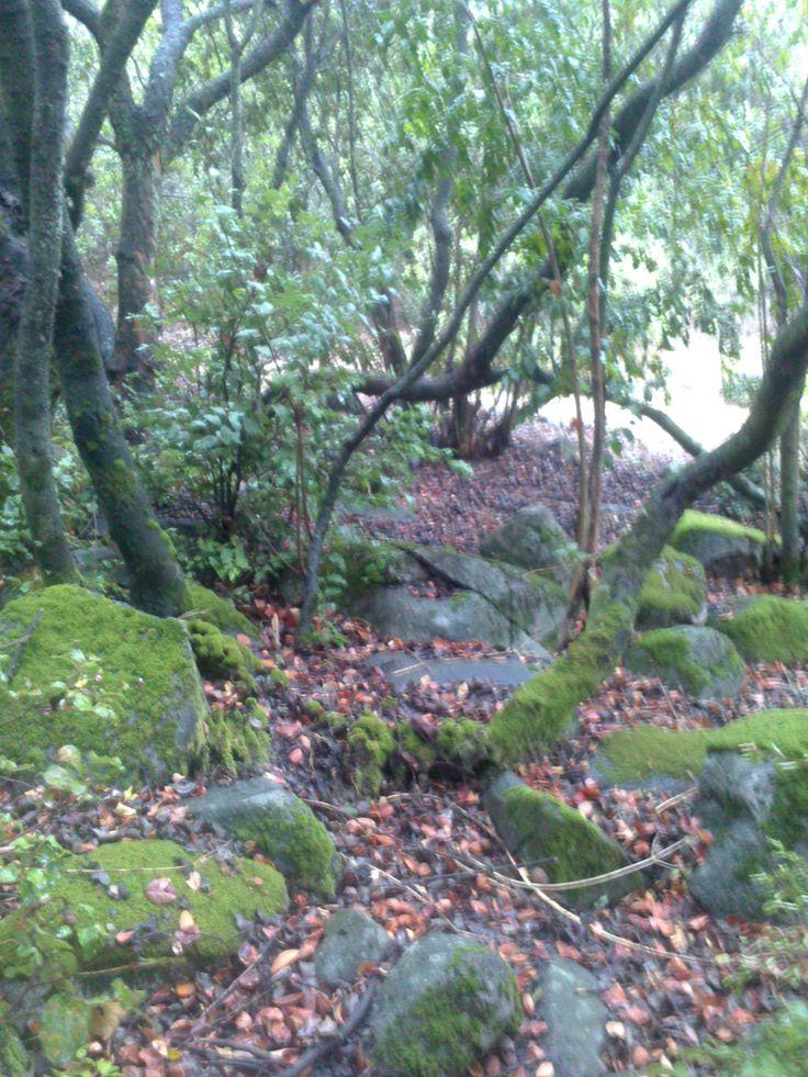Bosque después de la Lluvia