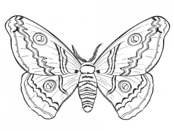 butterfly papillon wings coloring pages colouring adult