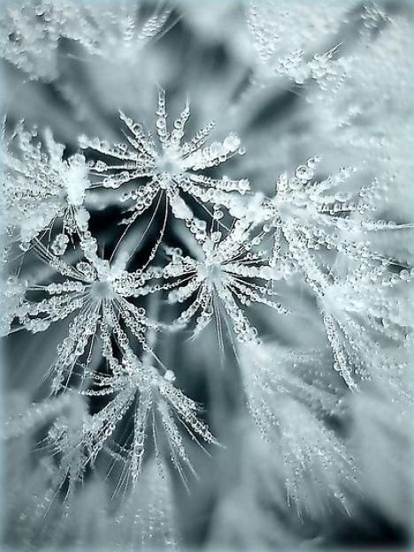 Snowflakes form when ice crystals form around microscopic dust particles in the air (hva)