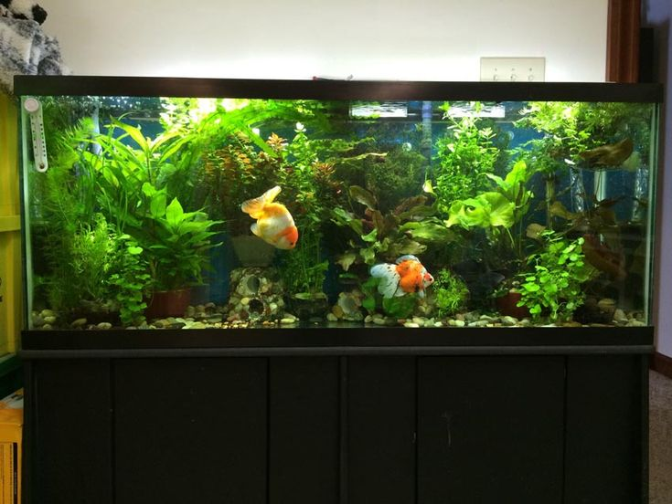 Best 25 30 Gallon Fish Tank Ideas On Pinterest Betta