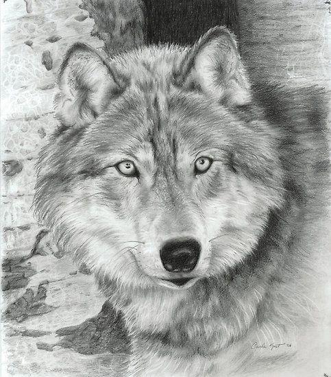 10 animaleschi splendidi disegni a matita : necozio.com