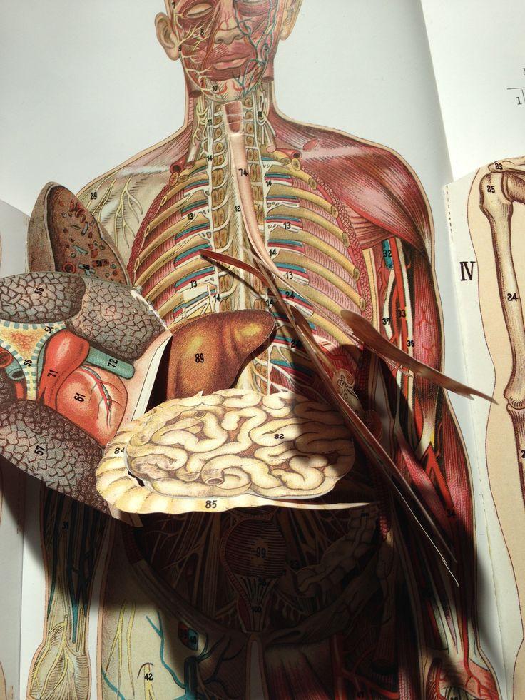 Schön Gnade Anatomie Pilates Galerie - Anatomie Von Menschlichen ...
