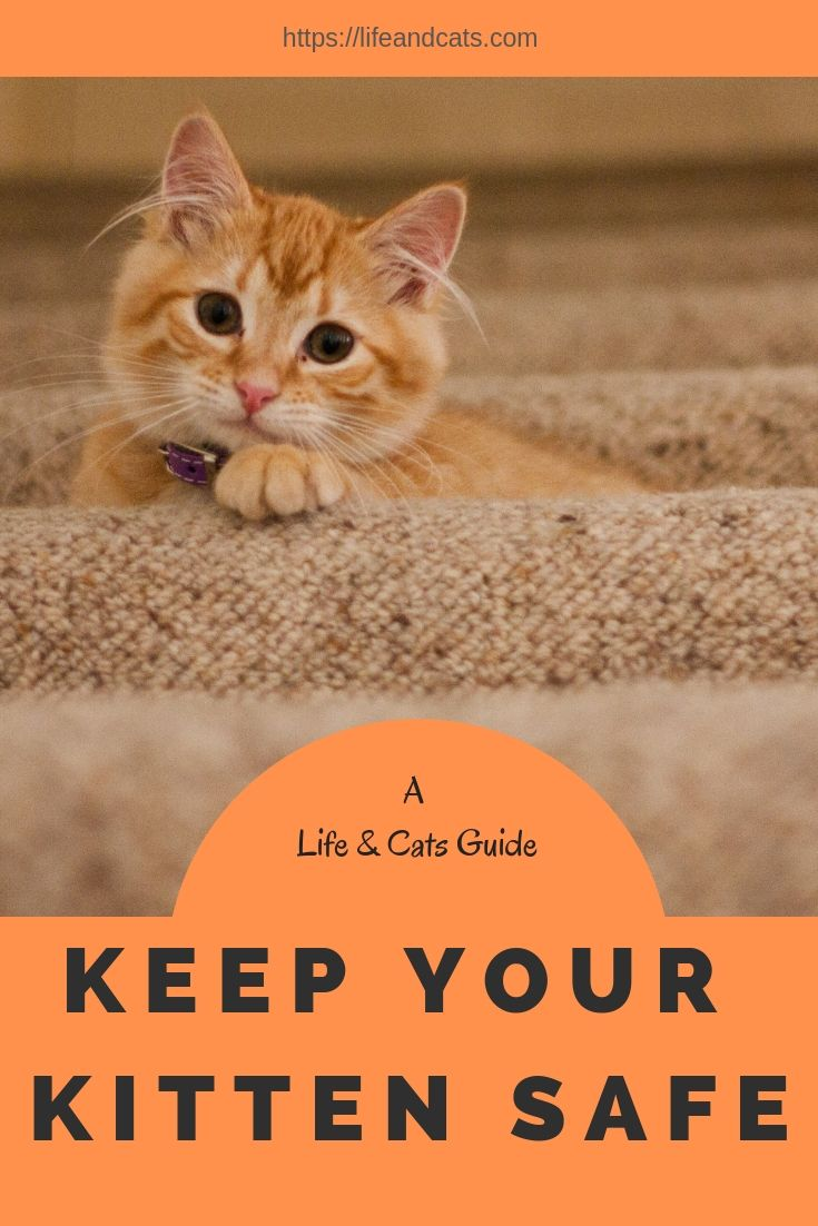 Kitten Proofing Your Home Life Cats Kitten Proofing Cat Care Cats