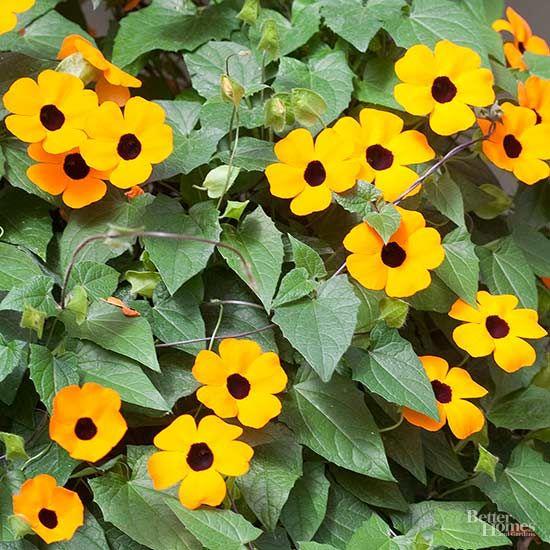 17 Best Ideas About Flower Vines On Pinterest Trellis