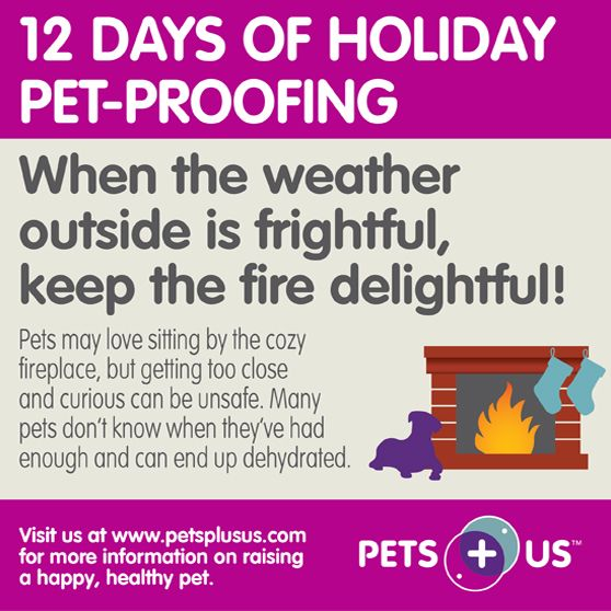 Get your house ready for the holidays with these pet-friendly tips! ow.ly/smf6q