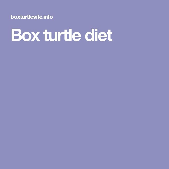 Box turtle diet