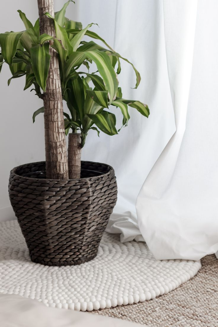 Shirisha ullkuleteppe fra Sukhi og en plante. Kredit: http://akutchlife.com/