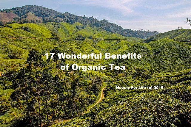 Benefits of Organic Tea