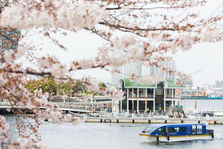 舟の上で横浜市みなとみらいにある「ヨコハマ グランド インターコンチネンタル ホテル」では、春爛漫の桜を愛でるアトラクションとして、首都圏初のホテル専用クルーズ船「ル・グラン・ブルー」の『大岡川桜クルーズ』が、2017年3月23日(木)から4月9日(日)までの期間、実施されます。