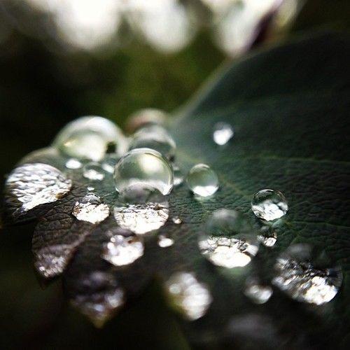 Macro water drops rain water outdoors nature leaf