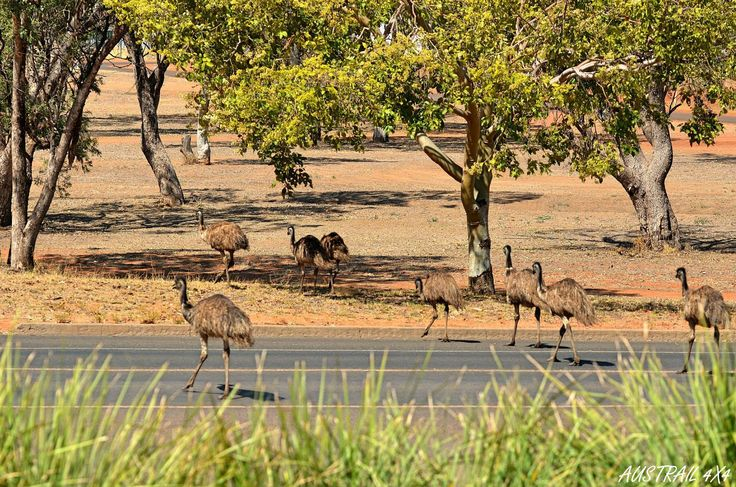 rush hour in Charleville, Queensland