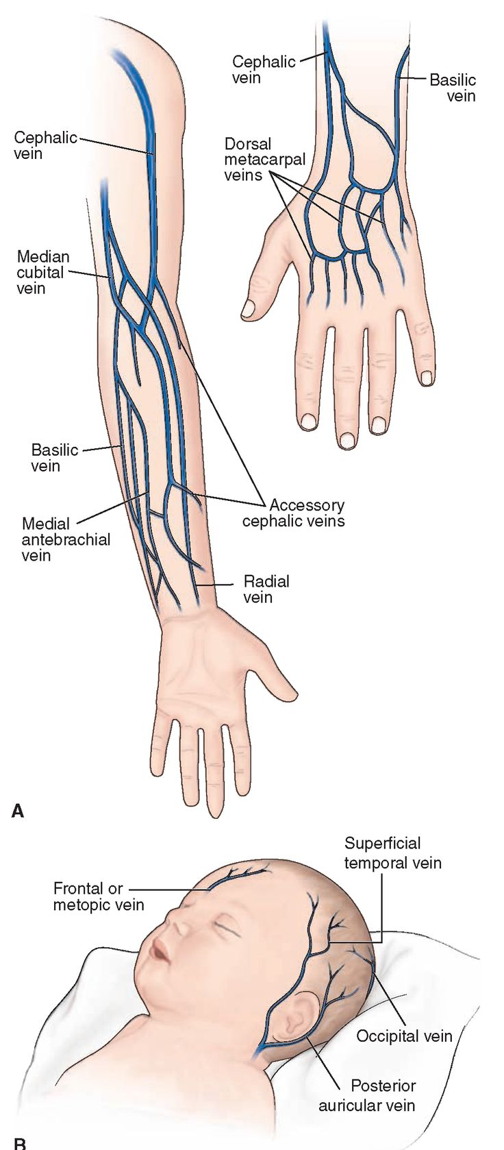 diagram of veins in wrist babies labelled diagram of fetus in womb pinterest • the world's catalog of ideas