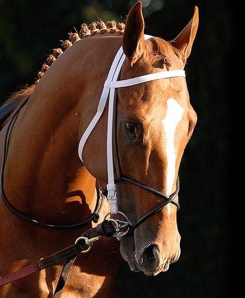 Curlin - Horse Racing Forum - TVG