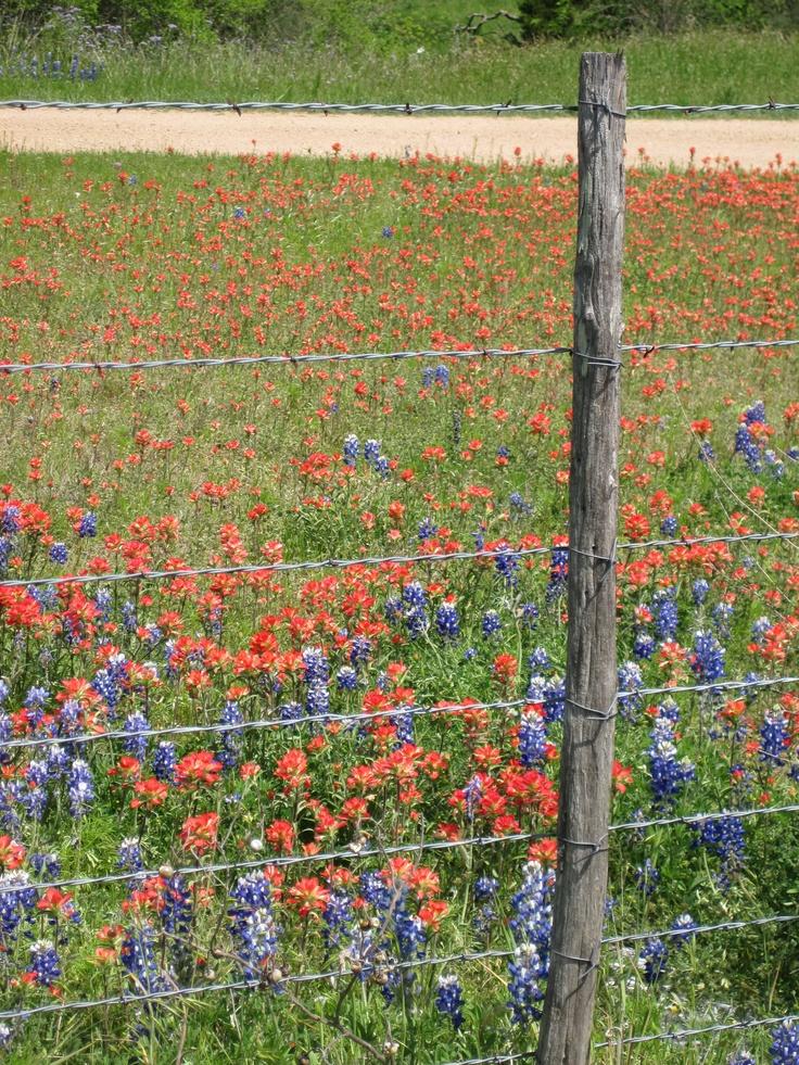 Texas Wildflowers: Texas Gardens, Texas Wildflowers, 12001600 Pixel, Native Texas, Texas Bluebonnets