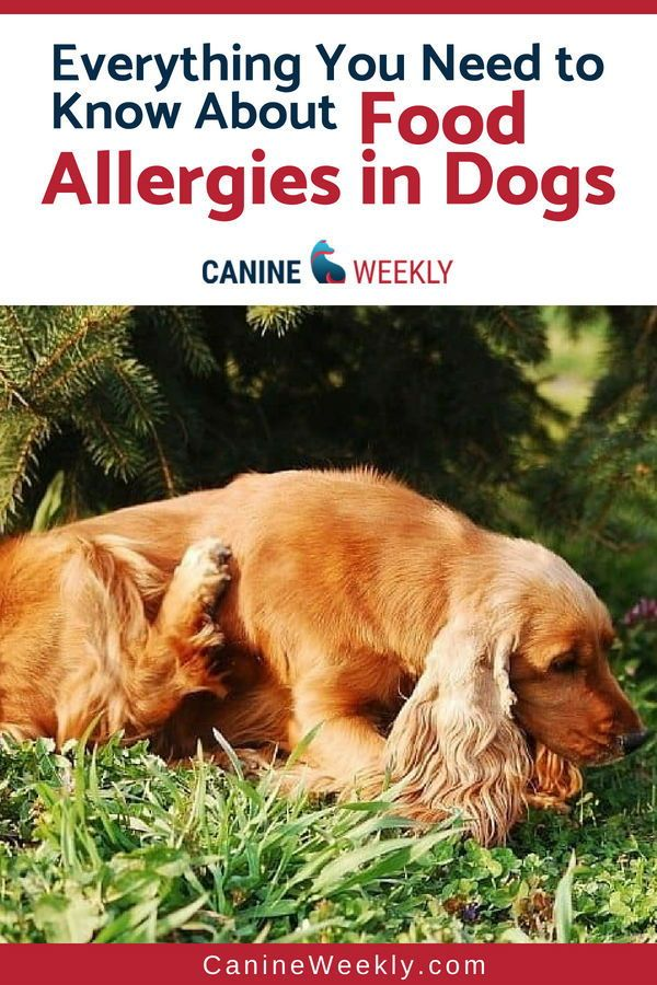Food Allergies In Dogs Understanding Triggers And Symptoms