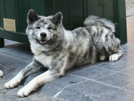 Seltene oder unbekannte Hunderassen
