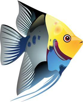 Tropiske Fisk, Fisk, Hav