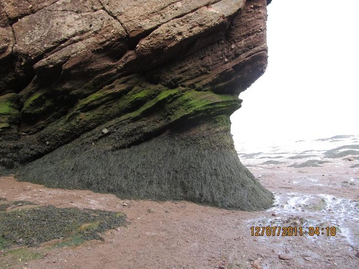 seaweed!
