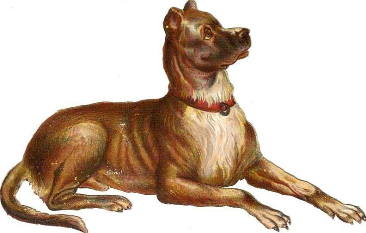 Larger Victorian Die Cut Scrap Brown Boxer Dog  c1880s