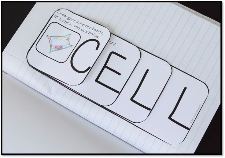 "Cell ""spell it"" mini-booklet for interactive science notebooks. Great intro to cell unit"
