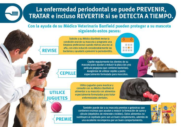 para la limpieza dental de tu perro