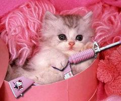 Pink Kitty with Hello Kitty Gun!