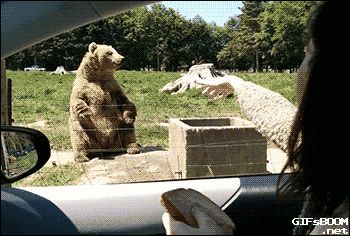 he caught it with his bear hands