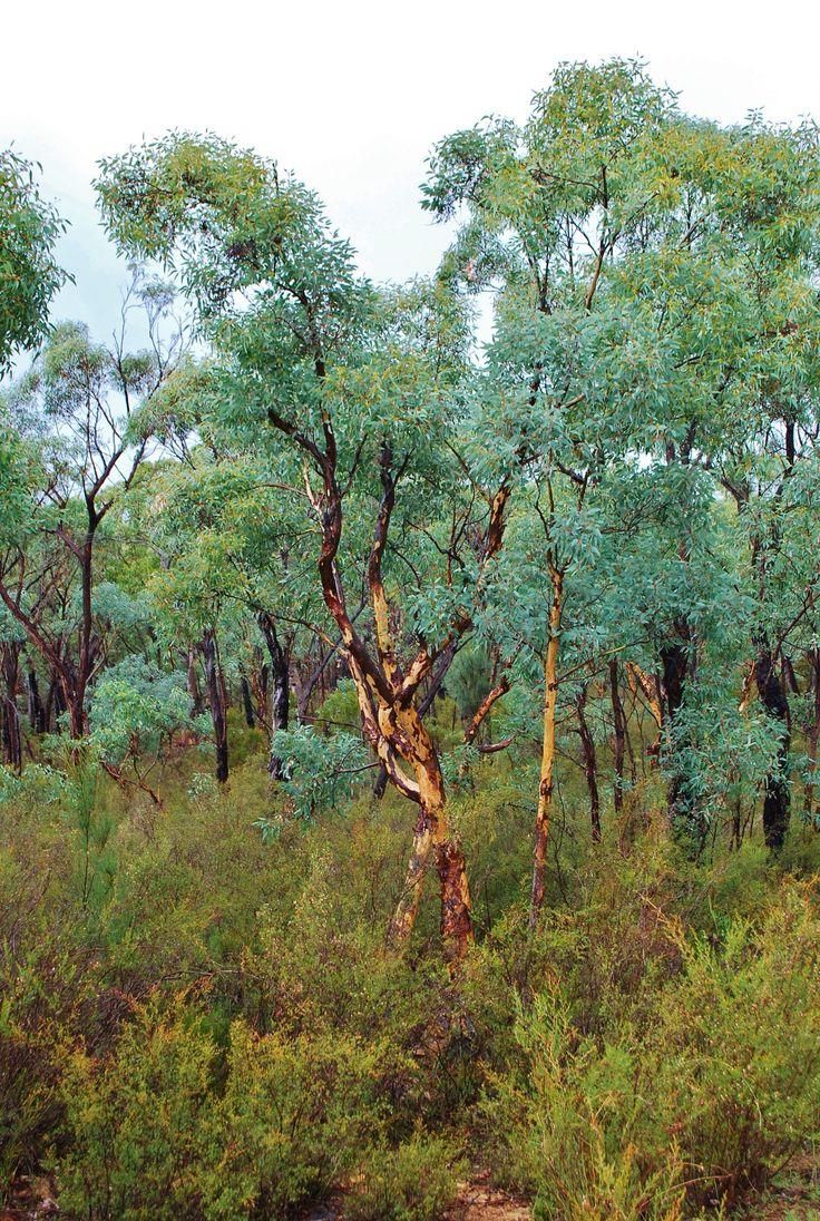 Kings Plains National Park NSW.