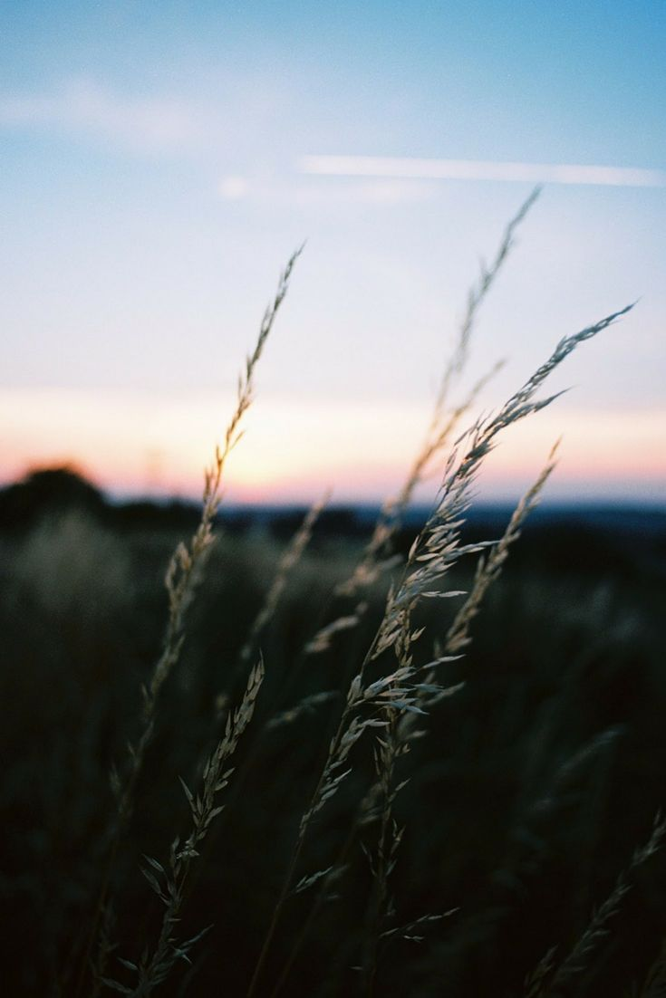 Sunset Gold | film photography | 35mm photography | film.lav
