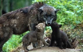fotos de animales salvajes con sus crias - Buscar con Google