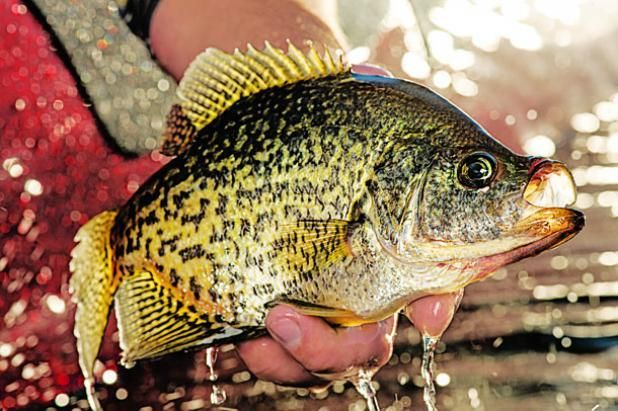 20 secrets to help you catch fish all summer long field for Crappie fishing secrets