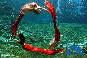 Weeki Wachee Springs' mermaids have been on my list for years. As a child, I thought glass-bottom boats, water slides into frigid water, and mermaids were the absolute epitome of all things wondrous.