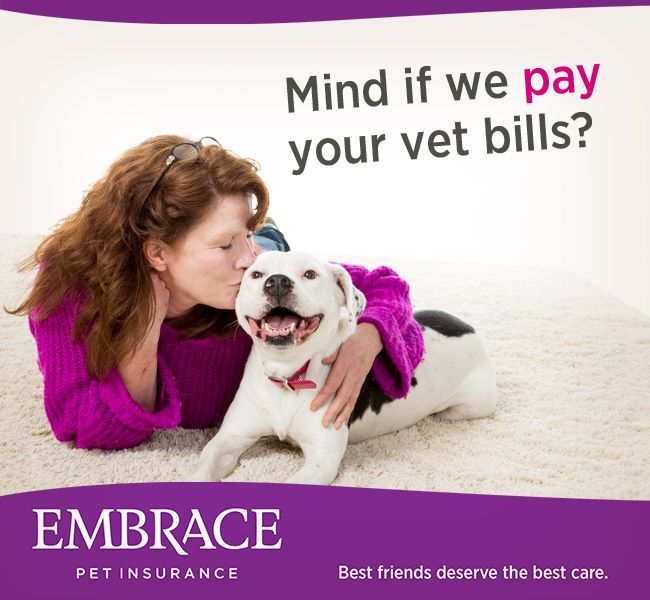 Don T Let Expensive Vet Bills Come Between You And The Best Care For Your Pet Get A Quote From Embrace Pet Insur Embrace Pet Insurance Dog Insurance Vet Bills