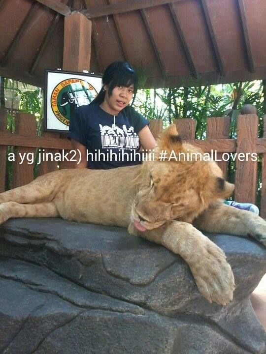 Foto kiriman Akkoe Mimin  Di TamanSafari 2 Prigen, wktu itu liburan kerja. Wlaupun sbnarnya takut tp ga tau rasanya pingin dan hasilnya kereen (aslinya takut gilaak)hihihihiii Pngin kesna lg pingin lgsung interaksi sama hewan yg Lain (yg jinakjinak mkstnya) #AnimalLoversEMCO