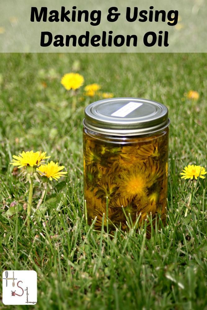 Infuse dandelion flowers in oil to help sore muscles and more.