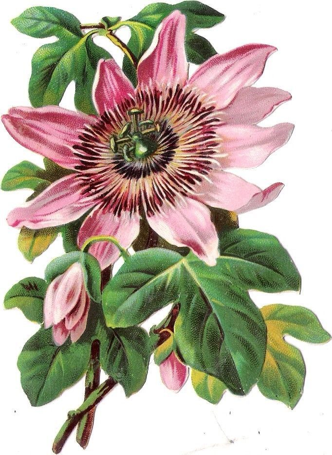 Oblaten Glanzbild scrap die cut chromo Blume 12,5cm  flower fleur: