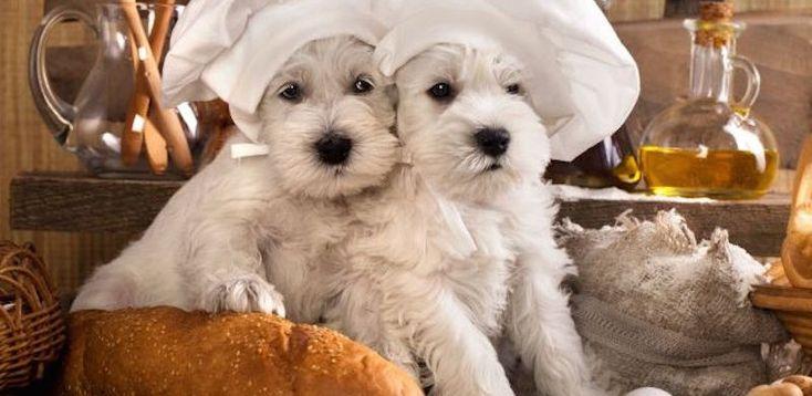 #Chic4Dog News! Dove mangiare insieme al tuo #cane? Qui i #ristoranti dove portare il tuo piccolo amico!