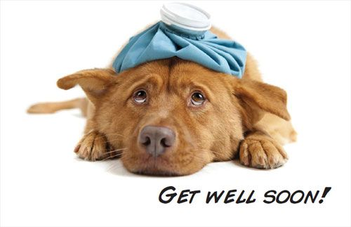 17 best images about get well on pinterest e cards Can a dog tell if another dog is sick