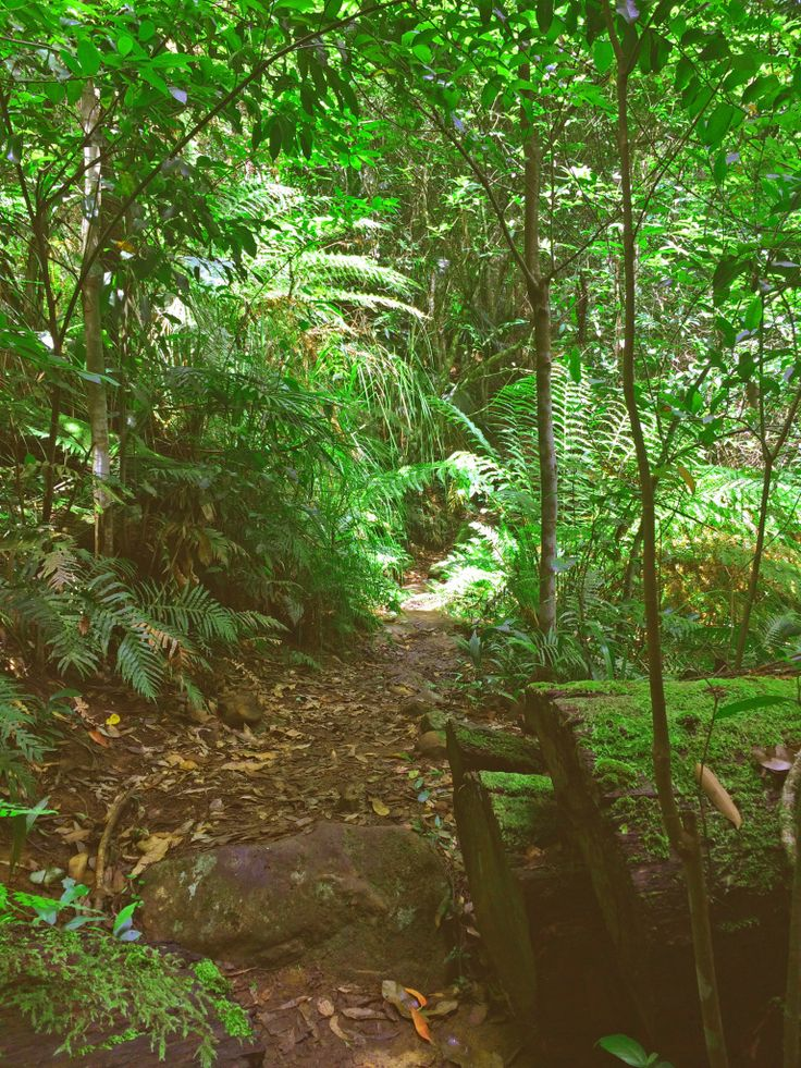 Every wondered what a walk through Australia's bushland is like? A couple of encounters with scary critters