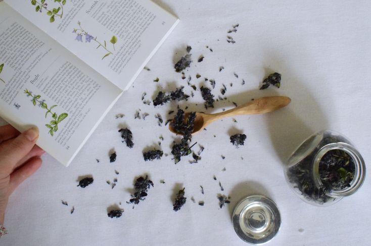 PLANT STUDY | Bugle