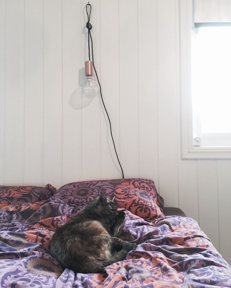 Bedroom and cat