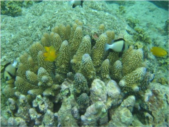 Satellites to assess coral reef health