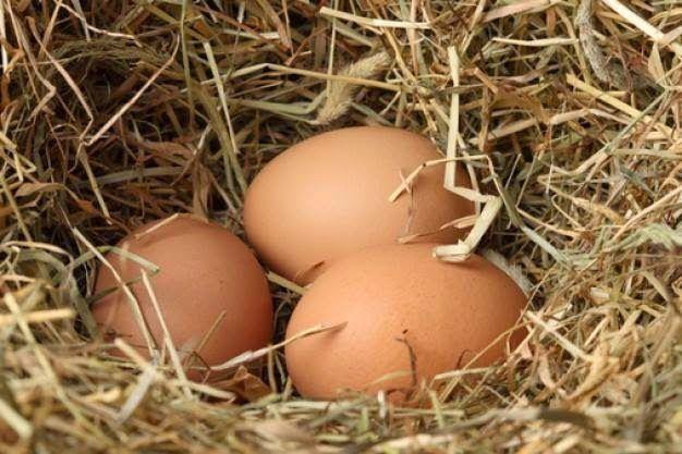 Köy Yumurtası - Köy Tavuğu - Organik Yumurta: organik koy yumurtasi