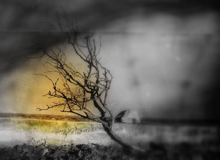 Photo Abstract by msitarus on Etsy